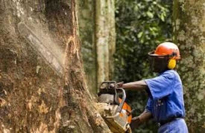 Accident d'abattage dans un chantier forestier à Mayoko, il se fracture la jambe droite