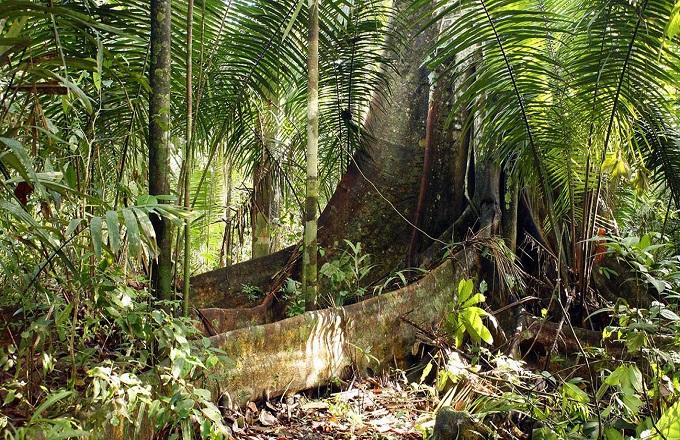 Protection des forêts : les efforts du Gabon récompensés à hauteur de 9 milliards de FCFA, un exemple à suivre !
