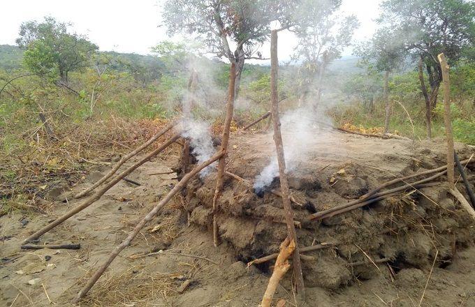 Dans la plupart des localités sur la route de Kinkala, le bois et le charbon constituent la principale activité des hommes dans la région du Pool