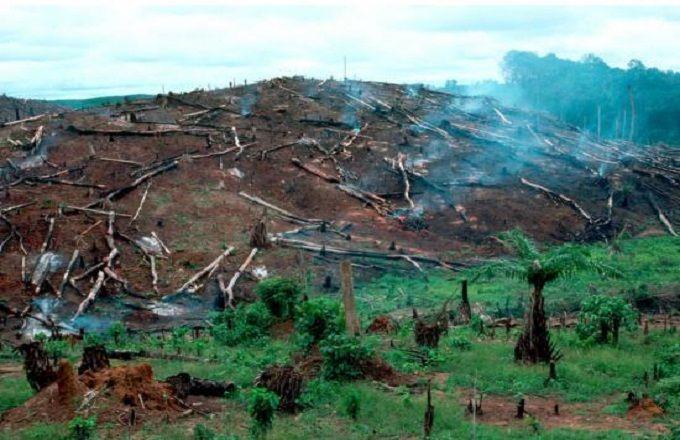 'utilisation du charbon de bois, l'exploitation forestière, l'agriculture migratrice et l'élevage, sont les principales causes de la diminution de la forêt du Bassin du Congo.